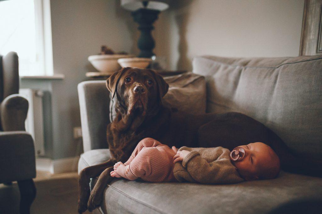 Baby op bank met hond bruine labrador tijdens lifestyle newbornfotograaf Apeldoorn