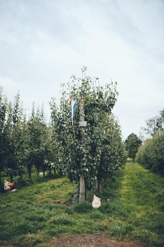 Fruittuin tijdens bruiloft in fruittuin trouwfotograaf Amsterdam Apeldoorn