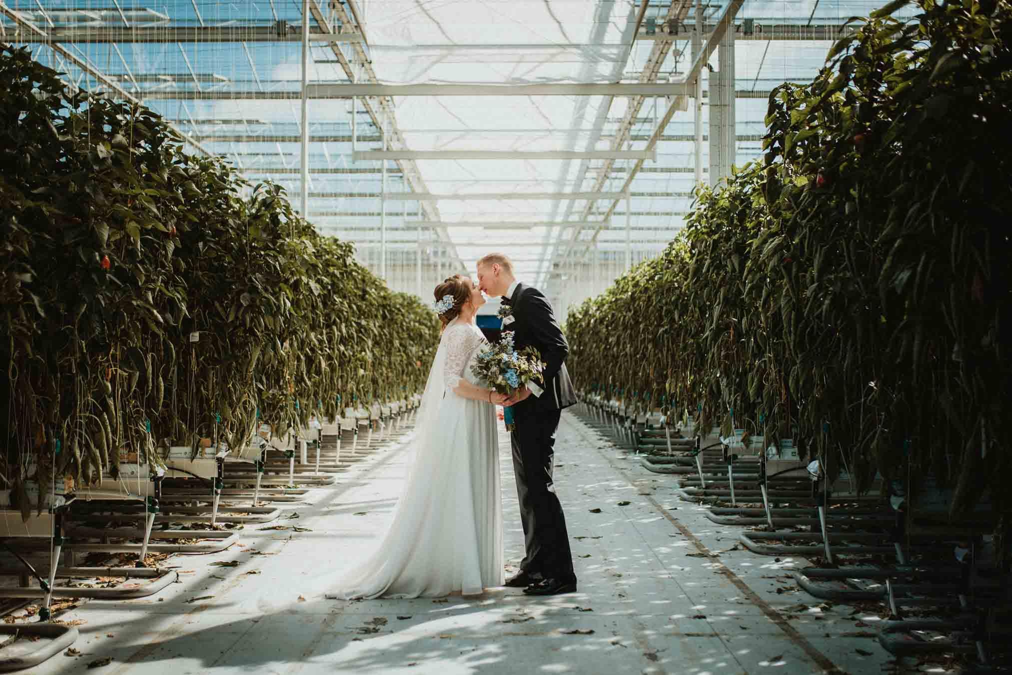 Spontane trouwfotografie in een kas paprikakas